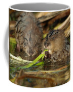 Cutest Water Rats Coffee Mug by James Peterson