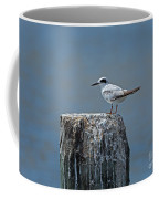 Forster's Tern Coffee Mug by Louise Heusinkveld