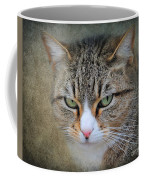 Gray Tabby Cat Coffee Mug by Jai Johnson