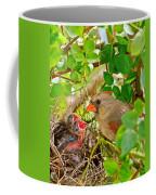 Mama Bird Coffee Mug by Frozen in Time Fine Art Photography