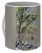 Pine Tree On A Mountain Coffee Mug by Susan Leggett