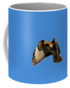 Red-tail Hover Coffee Mug by Mike  Dawson