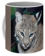 Reflective Bobcat Coffee Mug by John Haldane