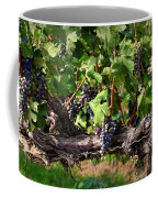 Ripening Grapes Coffee Mug by Carol Groenen