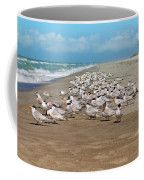 Royal Terns On The Beach Coffee Mug by Kim Hojnacki