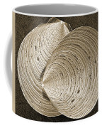 Seashells Spectacular No 11 Coffee Mug by Ben and Raisa Gertsberg