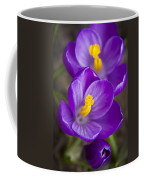Spring Crocus Coffee Mug by Adam Romanowicz