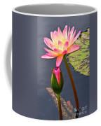Tall Waterlily Beauty Coffee Mug by Byron Varvarigos