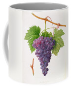 The Poonah Grape Coffee Mug by William Hooker