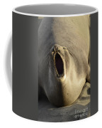 The Singing Seal Coffee Mug by Bob Christopher