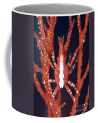 Bright Red Crab On Fan Coral, Papua New Coffee Mug by Steve Jones