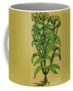 Centaurea Montana, Bachelors Button Coffee Mug by Science Source