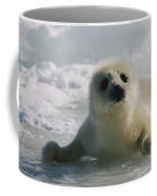A Juvenile Harp Seal Pagophilus Coffee Mug by Tom Murphy