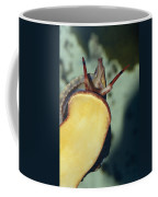A Red Lip Triton Snail Charonia Coffee Mug by Jason Edwards