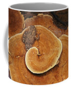 A Toad Sits On A Wooly Velvet Polypore Coffee Mug by Darlyne A. Murawski