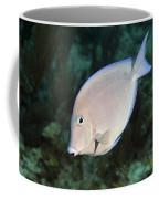 Blue Tang On Caribbean Reef Coffee Mug by Karen Doody