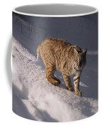 Bobcat Felis Rufus Prowls Over The Snow Coffee Mug by Dr. Maurice G. Hornocker