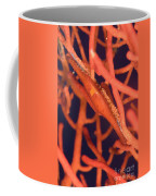 Bright Red Cowrie On Coral, Papua New Coffee Mug by Steve Jones