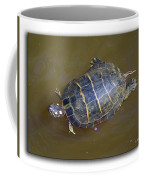 Chester River Turtle Coffee Mug by Brian Wallace