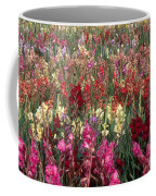 Gladioli Garden In Early Fall Coffee Mug by Yva Momatiuk and John Eastcott and Photo Researchers