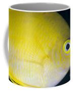Golden Damsel Close-up, Papua New Coffee Mug by Steve Jones