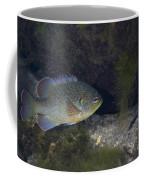 Green Sunfish Swimming Along The Rocky Coffee Mug by Michael Wood