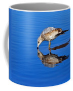Juvenile Ring-billed Gull  Coffee Mug by Tony Beck