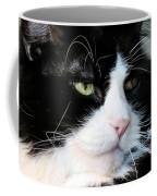 Maine Coon Face Coffee Mug by Art Dingo