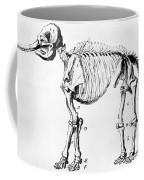 Mastodon Skeleton Drawing Coffee Mug by Science Source