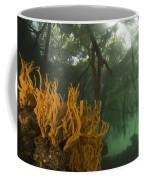 Orange Sponges Grow Coffee Mug by Tim Laman