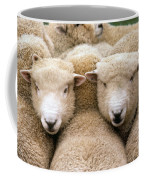 Romney Sheep Coffee Mug by Gregory G Dimijian and Photo Researchers