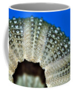 Shell With Pimples 2 Coffee Mug by Kaye Menner