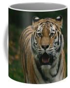 Tiger Coffee Mug by David Rucker