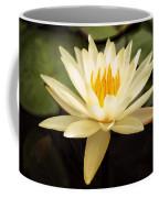 Water Lily Coffee Mug by Darren Fisher