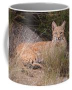 Bobcat At Rest Coffee Mug by Alan Toepfer