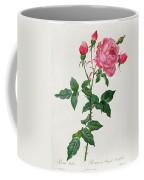 Rosa Indica Coffee Mug by Pierre Joseph Redoute