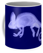 Veiled Chameleon X-ray Coffee Mug by Ted Kinsman