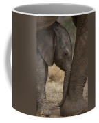 An Elephant Calf Finds Shelter Amid Coffee Mug by Michael Nichols