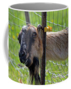 Busted Coffee Mug by Mike  Dawson