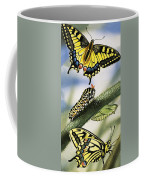 Butterflies Coffee Mug by English School