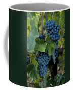 Close View Of Chianti Grapes Growing Coffee Mug by Todd Gipstein