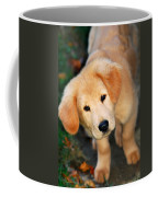 Curious Golden Retriever Pup Coffee Mug by Christina Rollo