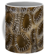 Extreme Close-up Of A Crust Anemone Coffee Mug by Terry Moore