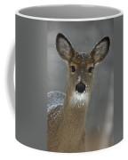 Female White-tailed Deer, Odocoileus Coffee Mug by John Cancalosi