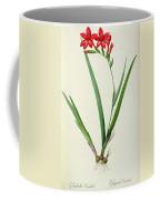 Gladiolus Cardinalis Coffee Mug by Pierre Joseph Redoute