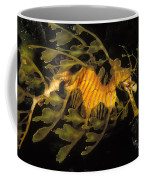 Leafy Seadragon, Off Kangaroo Island Coffee Mug by James Forte