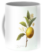 Orange Tree Coffee Mug by Granger
