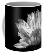 Raindrops On Daisy Black And White Coffee Mug by Jennie Marie Schell