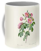Rosa Mollissima Coffee Mug by Claude Antoine Thory