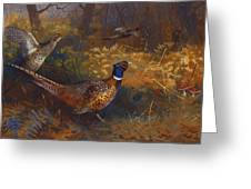 A Cock And Hen Pheasant At The Edge Of A Wood Greeting Card by Archibald Thorburn
